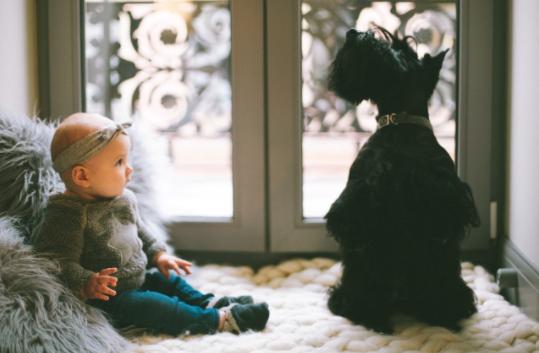 Is It A Good Idea To Get A Dog When You Have A Baby?